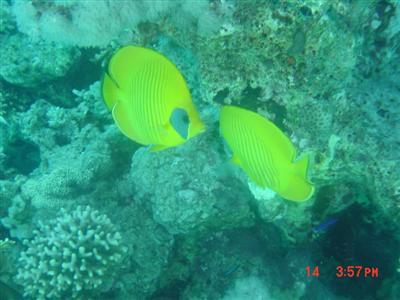 diving.20050714.1.jpg