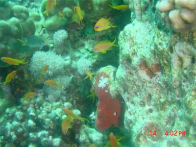 diving.20050714.2.jpg