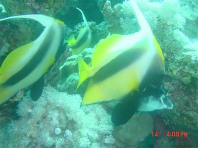 diving.20050714.3.jpg