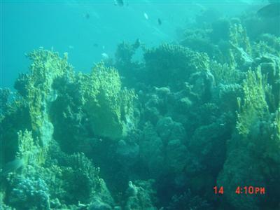diving.20050714.4.jpg