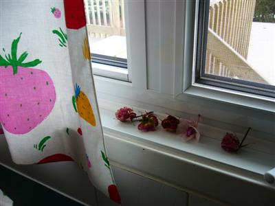flowers.kitchen.window.jpg