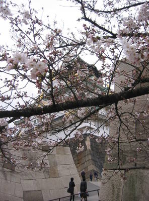 japan.osaka.castle.sakura.jpg