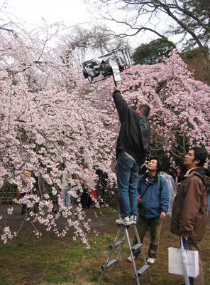 kyoto.camera.on.sakura.jpg