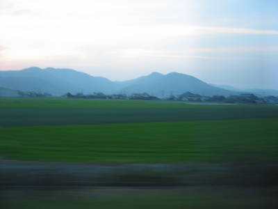 rice.fields.jpg