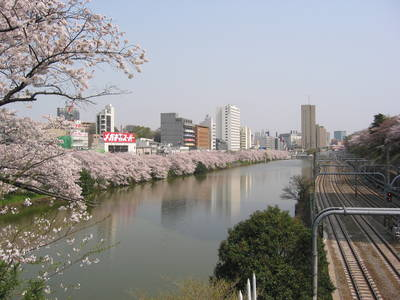 sakura.railroad.jpg