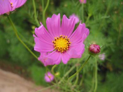 dalat.flower.jpg